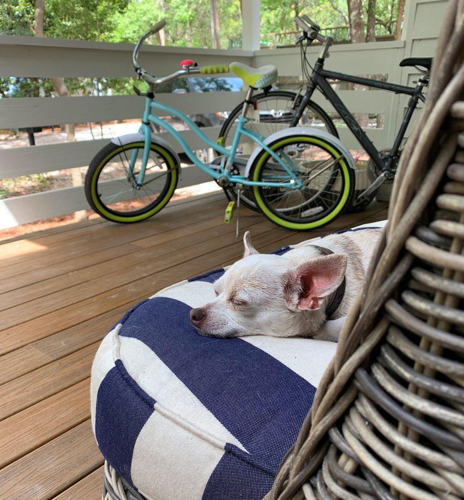 Чихуахуа спит на наружной подушке на крыльце