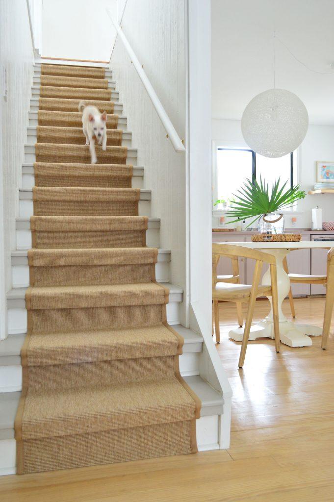 Собака чихуахуа сбегает по лестнице с сизалевым бегуном