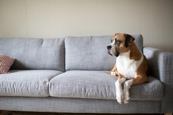 Материал дивана в зависимости от использования