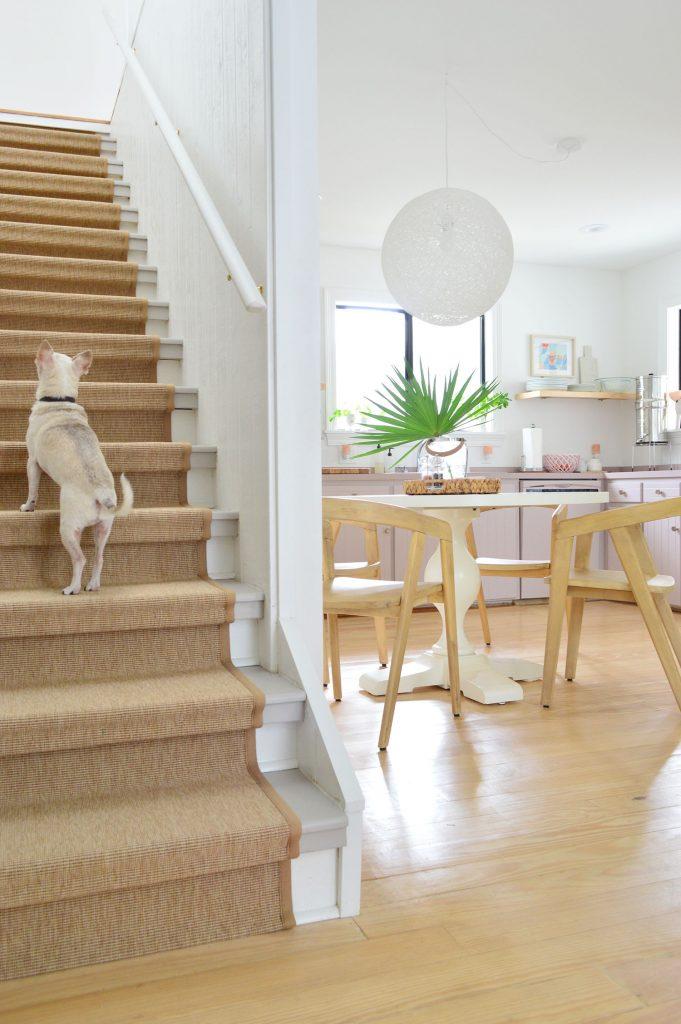 Чихуахуа поднимается по сизалевой лестнице на фоне кухни