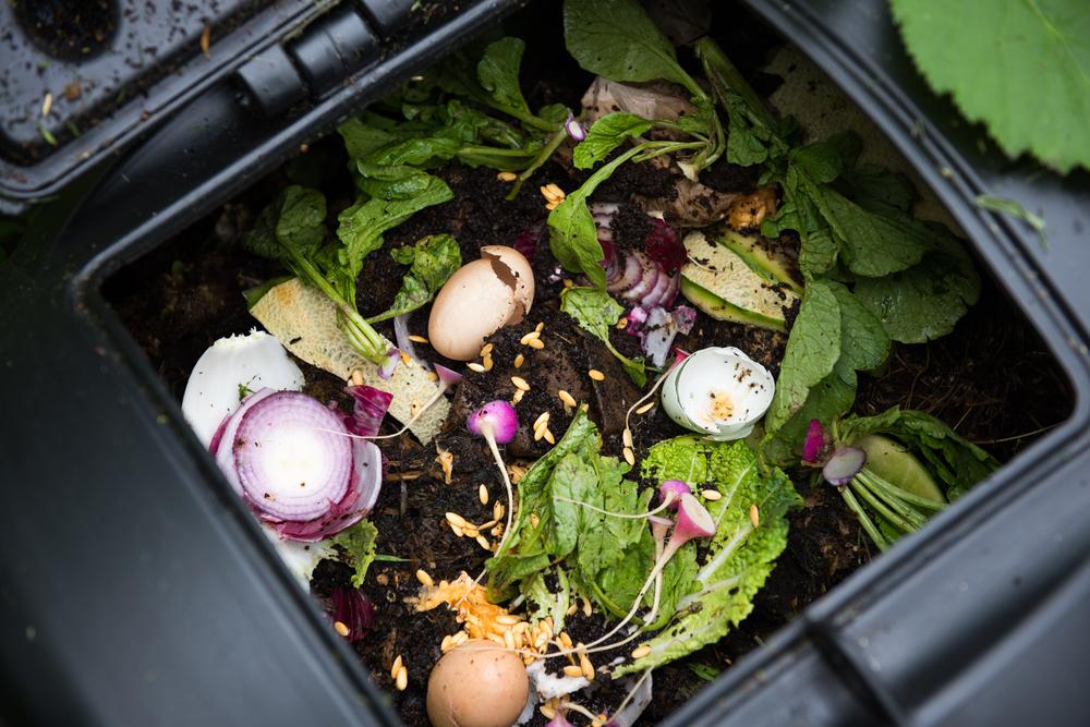 Экологичная и зеленая кухня