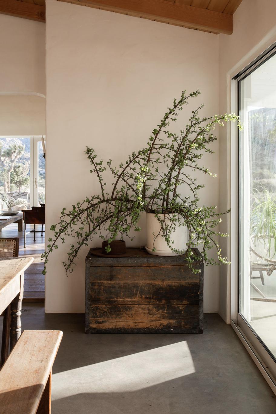 современный глинобитный дом в пустыне, тур по диким растениям