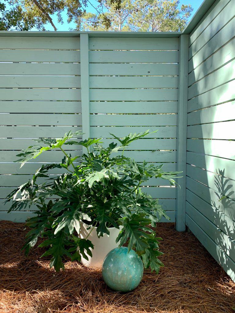 Большое растение в горшке в углу бокового забора вместе с патиновым зеленым шаром для наблюдения