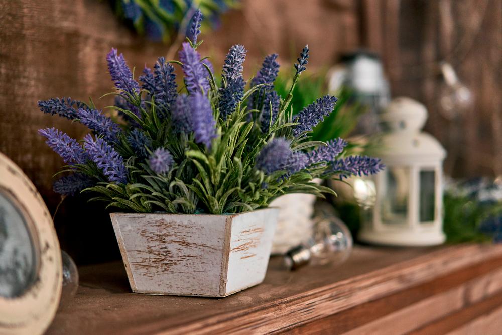 красивые растения васту