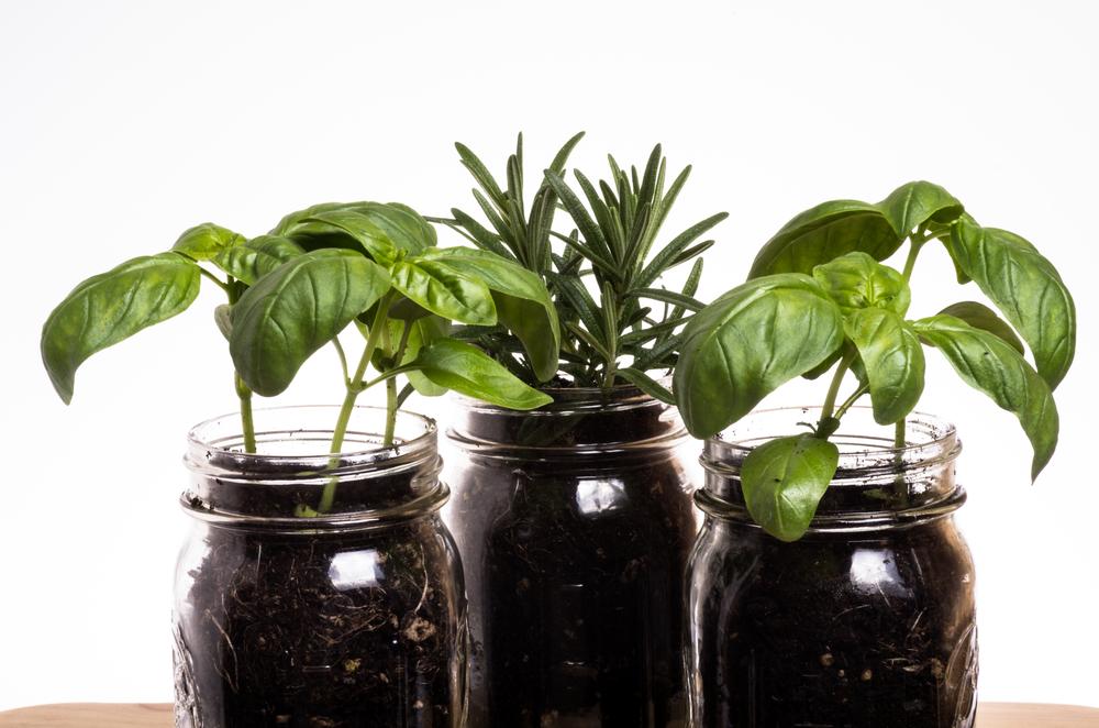 Ремонт кухни с растениями