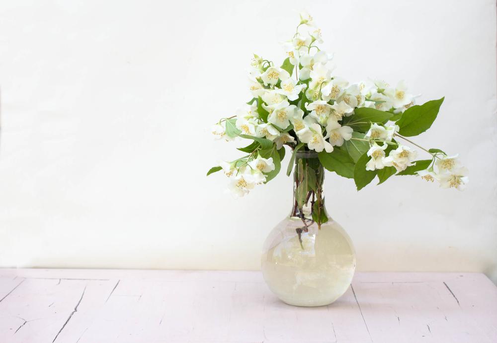Цветущие растения для Васту