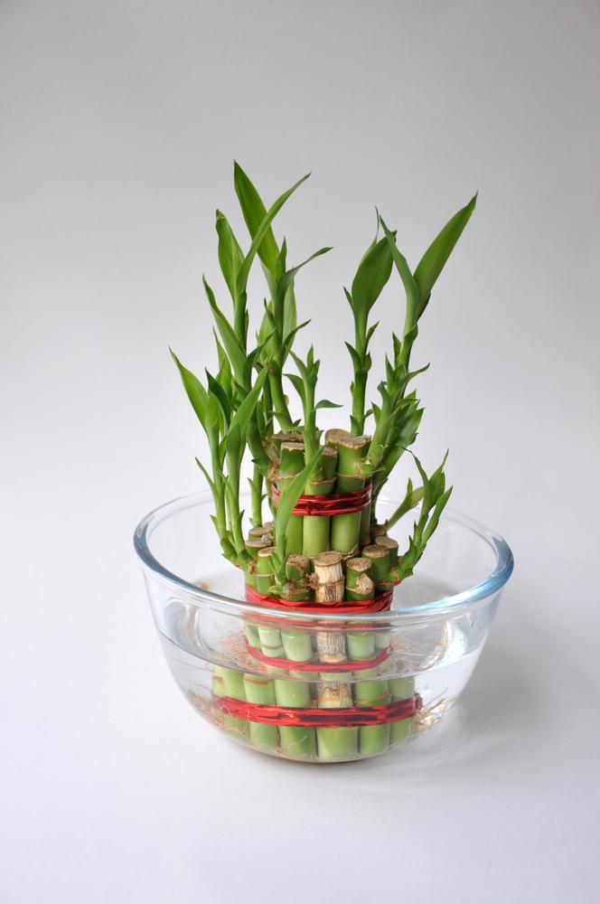 маленькие растения васту