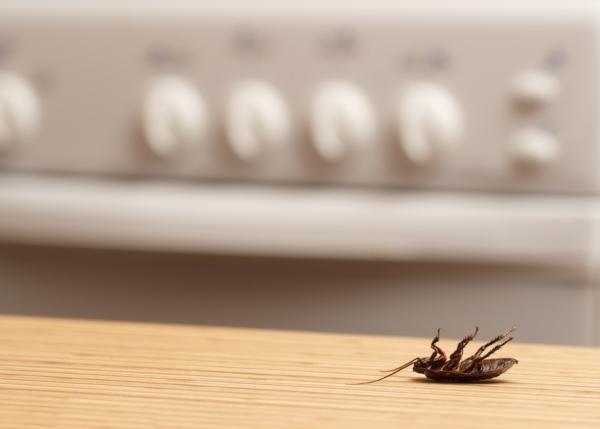 советы и средства защиты от домашних вредителей