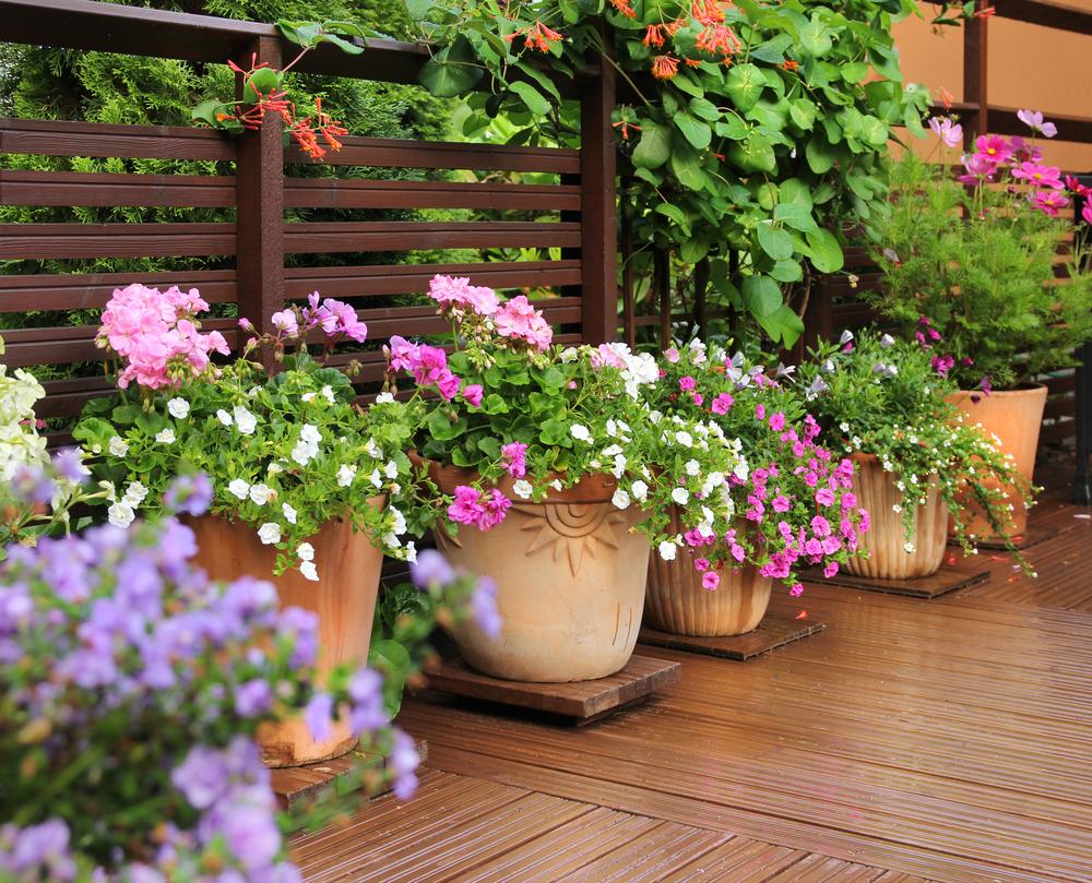 Идеи горшков и вазонов для террасного сада