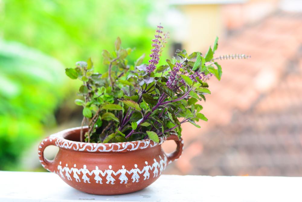 Васту растения